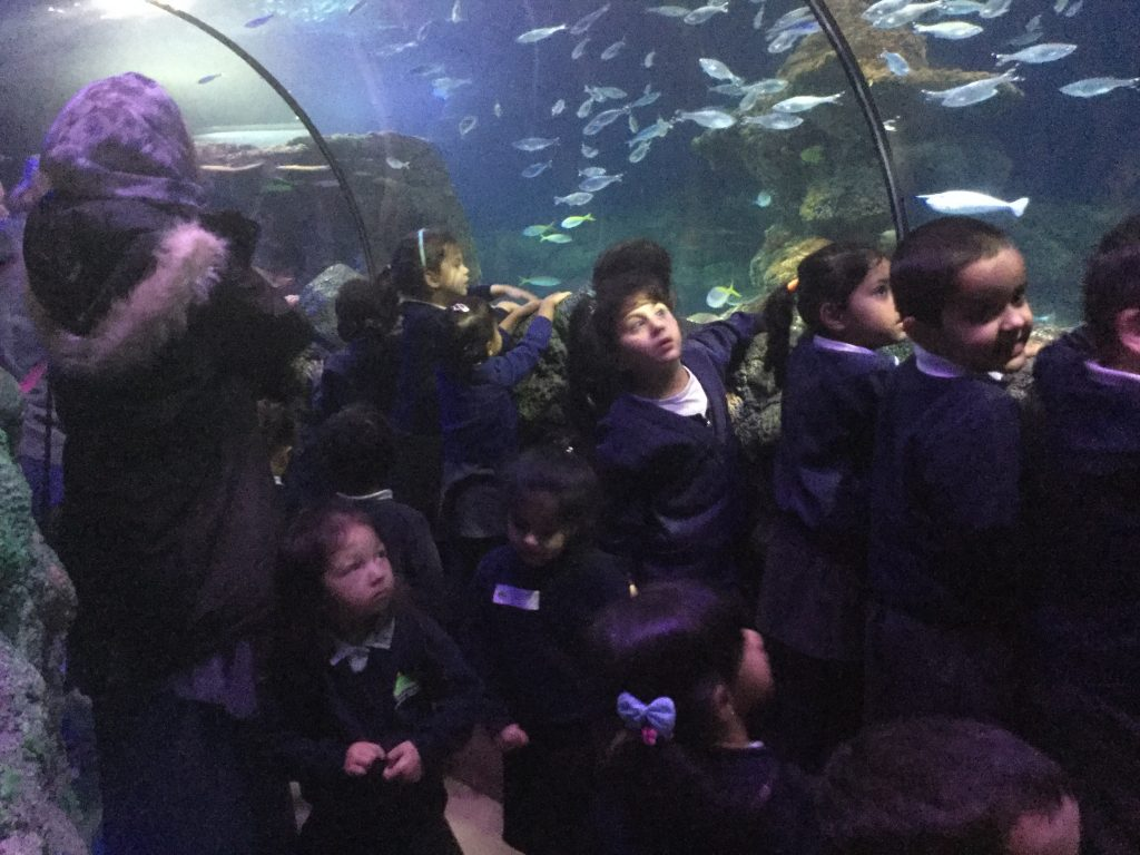 Sealife Centre Delights our Nursery! - Cheetham